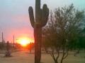 winter_rose_sunset-jpg